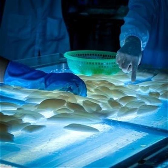 Preparatório MAPA - Médico Veterinário - Online