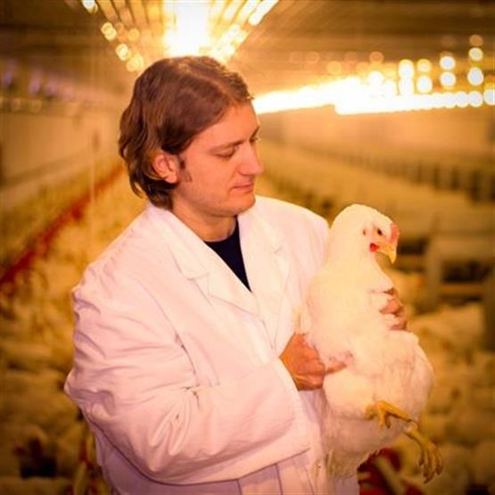 Capacitação em Bem Estar Animal e Sistemas de Abate de Aves