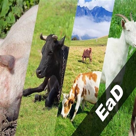 Capacitação em Bem Estar Animal - *Bônus Novo RIISPOA