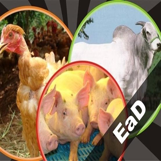 Capacitação em Patologias de Animais de Açougue - *Bônus Novo RIISPOA