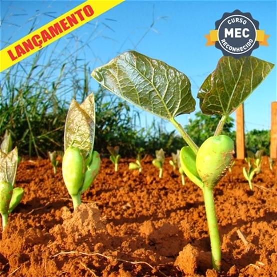 MBA em Manejo de Solos e Nutrição de Plantas - EaD