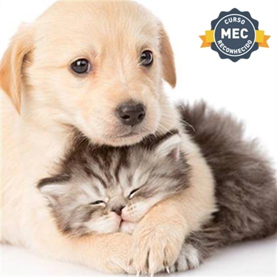 MBA em Clínica Médica de Pequenos Animais - Ead