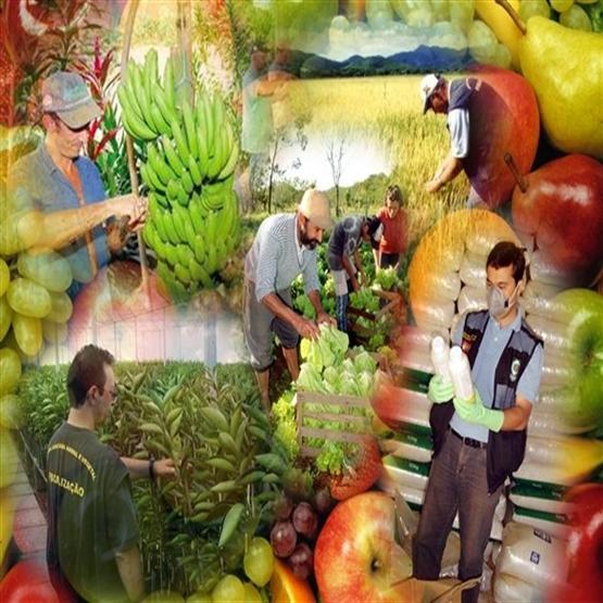 Defesa Sanitária Vegetal  - Pós Graduação EAD